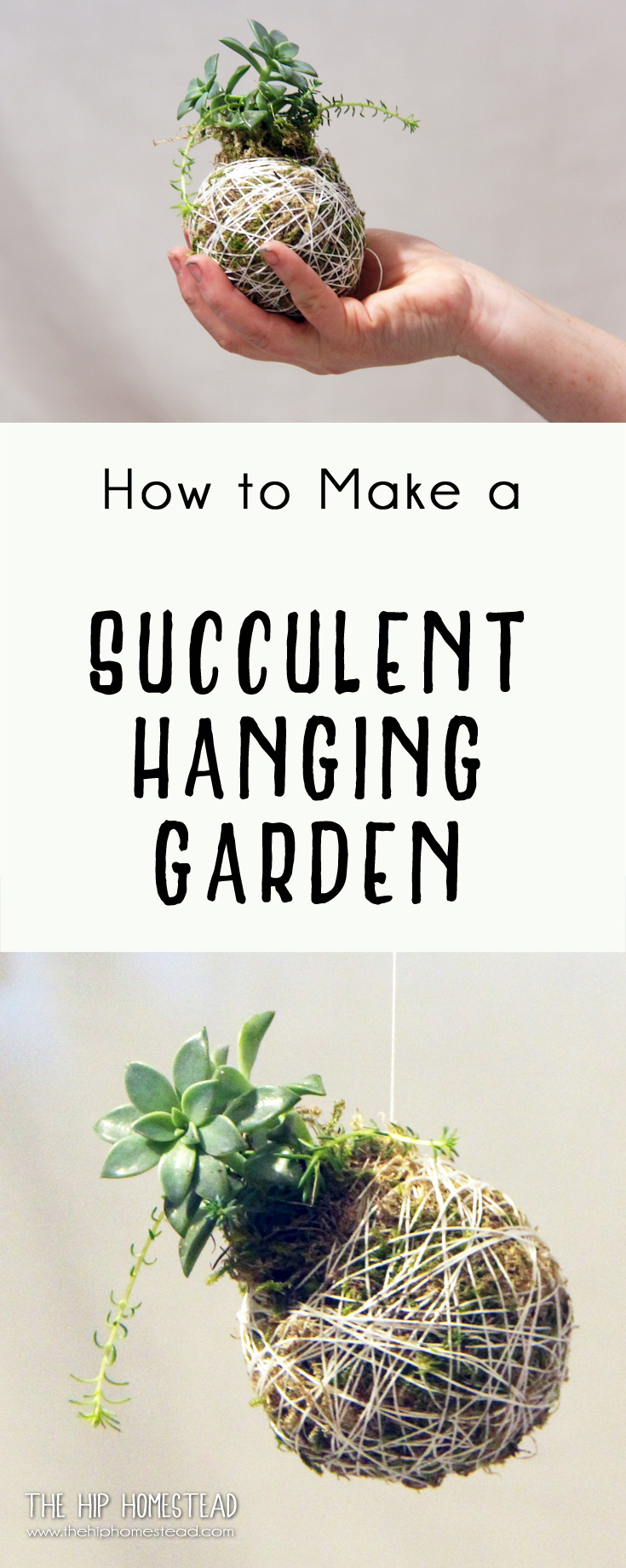 How To Make A Hanging Succulent Garden The Hip Homestead